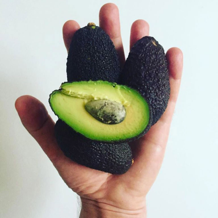 mini aguacates tiny avocados