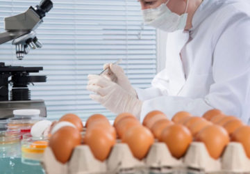 uova biologiche olandesi contaminate Fipronil Germania